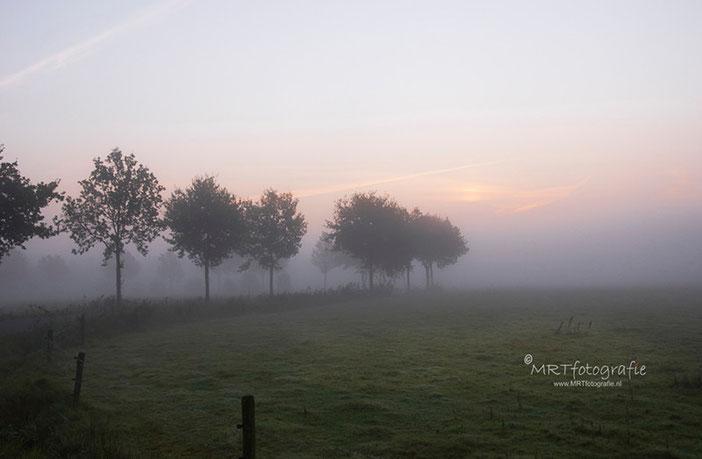 Bomenrij langs weiland in de mist