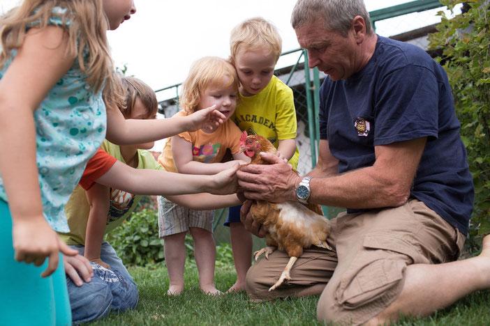 Bei den Hühnern werden täglich frische Eier geholt.