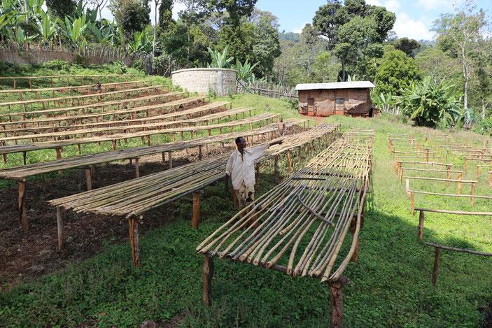 収穫したコーヒー豆を乾燥させる棚。オフシーズンのため、稼働していませんでした。
