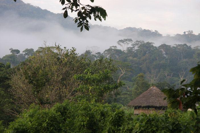 Šuarų trobelė Amazonijoje Ekvadore