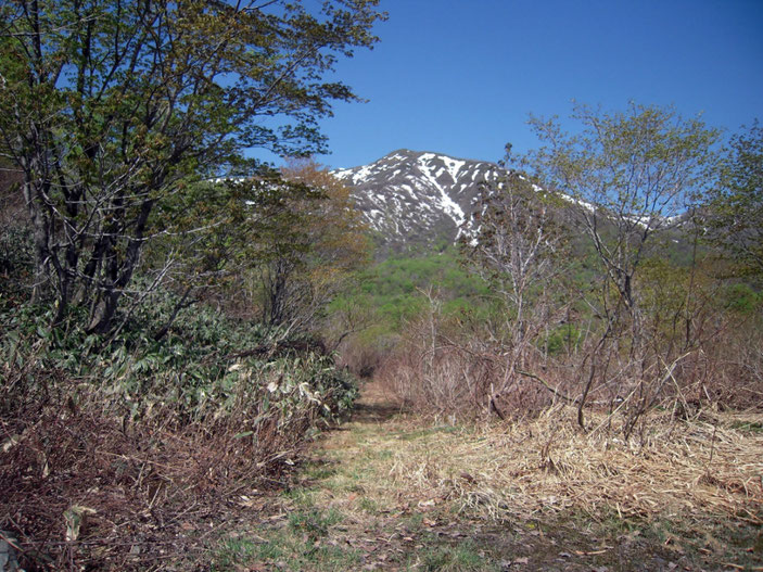 旧和田山牧場から臨む野伏ヶ岳