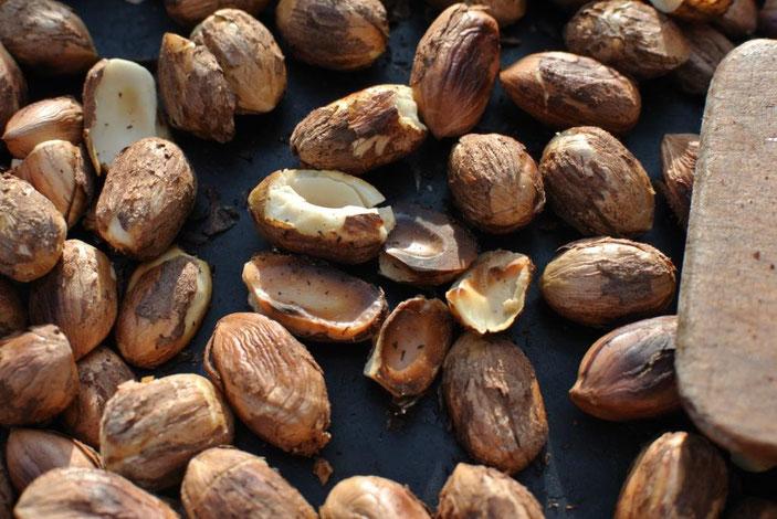 Haselnüsse aus dem eigenen Garten: Schokocreme
