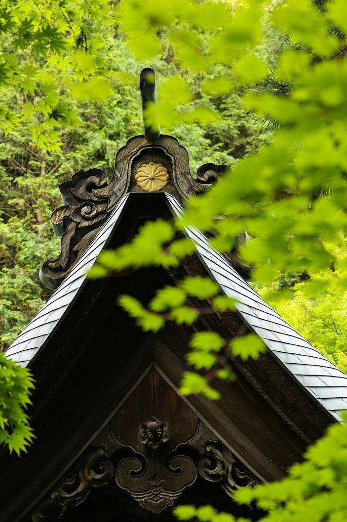 内々神社 CanonEOS8000D CanonEF70-300mmF4-5.6L photo:toshimasa