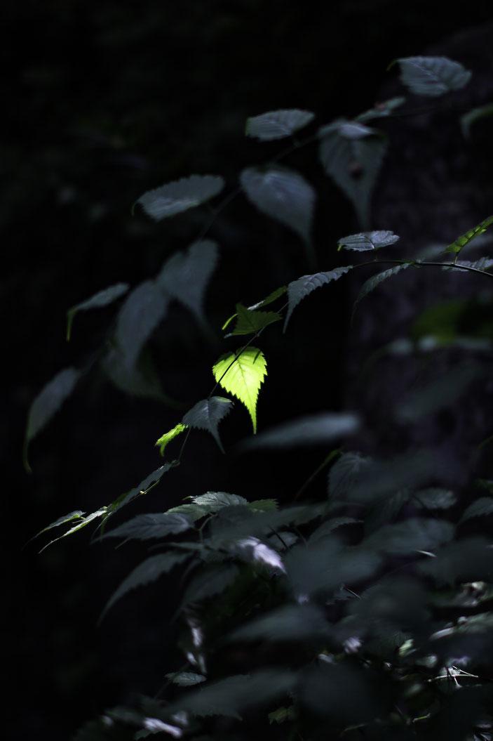 丈山苑 CanonEOS8000D Sigma50mmF1.4 photo:toshimasa