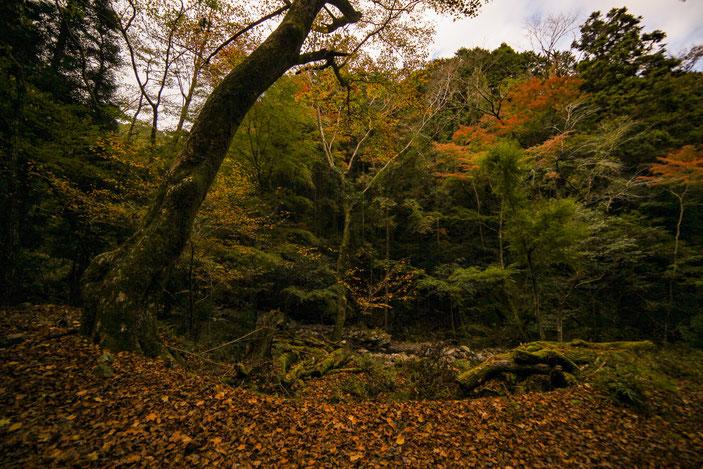 くらがり渓谷 CanonEOS5Dmk2 SAMYANG14mmF2.8 iso100 14mm f8 1/400 Tv photo : toshimasa