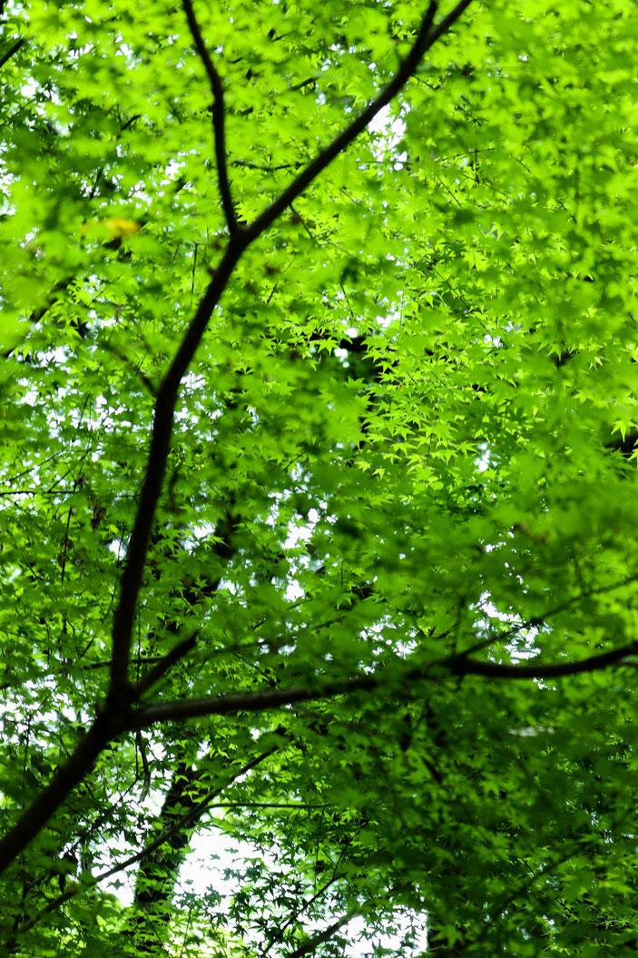 丈山苑 CanonEOS8000D CanonEF70-300mmF4-5.6L iso100 70mm f4 0.8 Tv photo : toshimasa