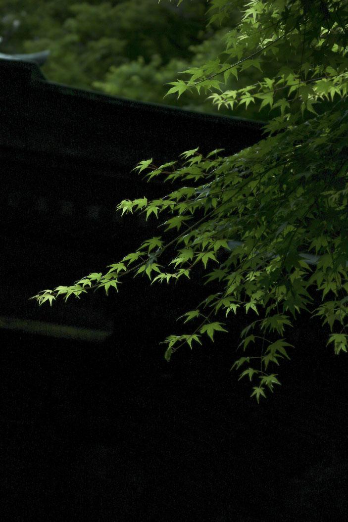 丈山苑 CanonEOS8000D CanonEF70-300mmF4-5.6L iso100 70mm f4 1/320 Tv photo : toshimasa