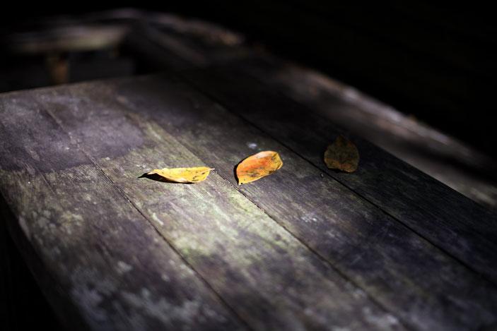 くらがり渓谷 CanonEOS5Dmk2 Sigma50mmF1.4    photo:toshimasa