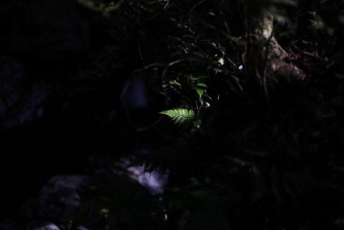 くらがり渓谷 CanonEOS5Dmk2 Sigma50mmF1.4EX iso100 50mm f1.4 1/2500 Tv photo : toshimasa
