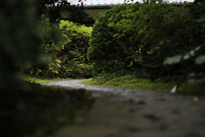 丈山苑 CanonEOS8000D Sigma50mmF1.4EX ISO100 50mm F1.4 1/1000 Tv photo : toshimasa