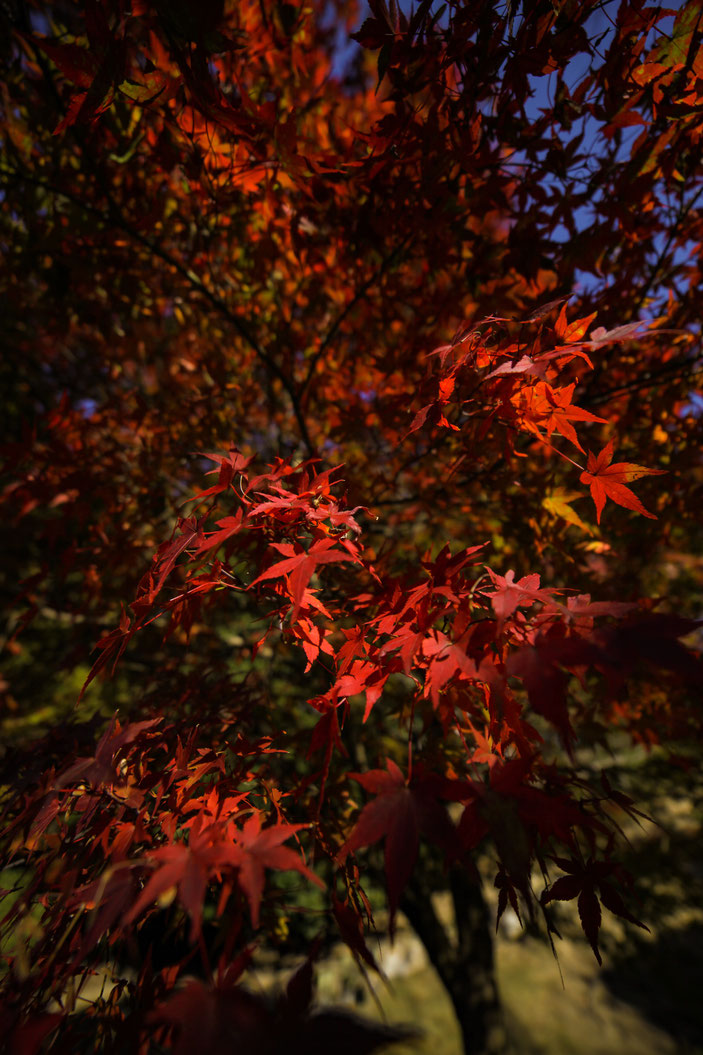 フォレスタヒルズ CanonEOS5Dmk2 SAMYANG14mmF2.8 iso100 14mm f8 1/1600 Tv photo : toshimasa
