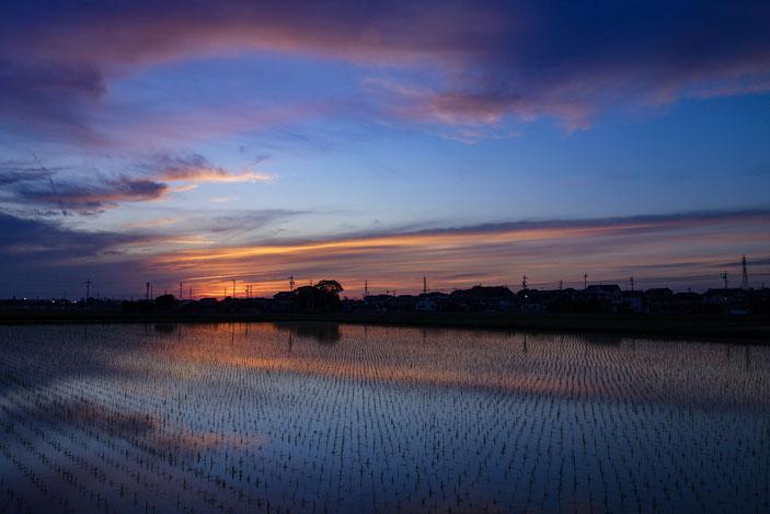 SONY DSC-RX100 photo:toshimasa