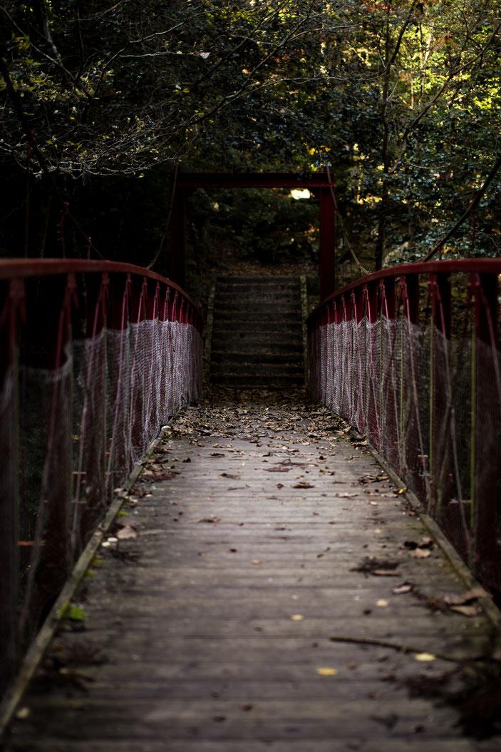 くらがり渓谷 CanonEOS5Dmk2 Sigma50mmF1.4EX iso100 50mm f1.4 1/250 Tv photo : toshimasa