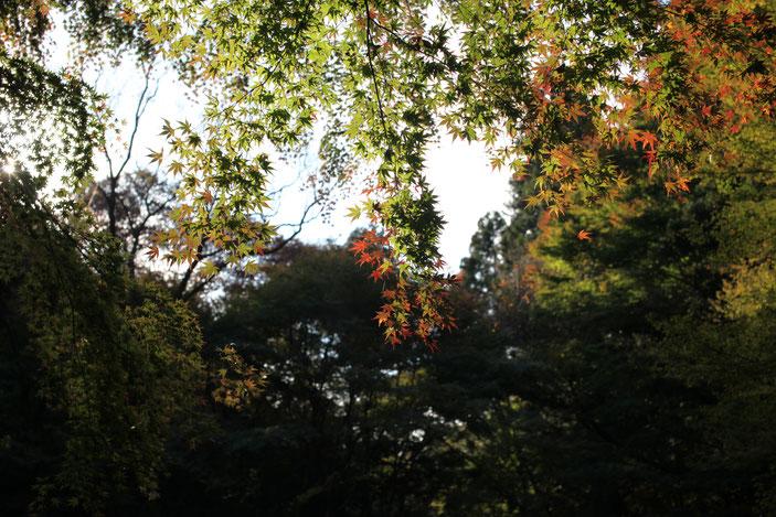 くらがり渓谷 CanonEOS5Dmk2 Sigma50mmF1.4 iso100 50mm f5 1/125 Tv photo : toshimasa