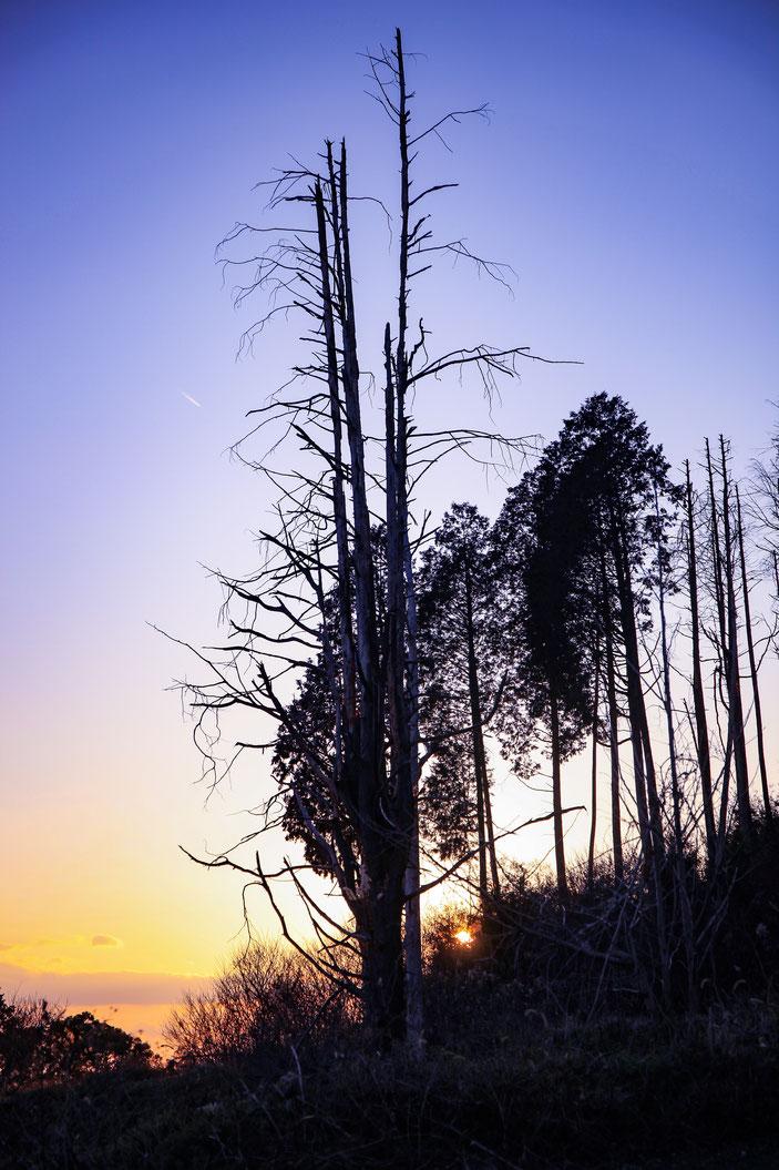 定光寺付近 CanonEOS5Dmk2 CanonEF24-70mmF4L photo : toshimasa