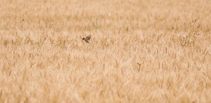 デンパーク周辺 CanonEOS8000D CanonEF70-300mmF4-5.6L photo:toshimasa