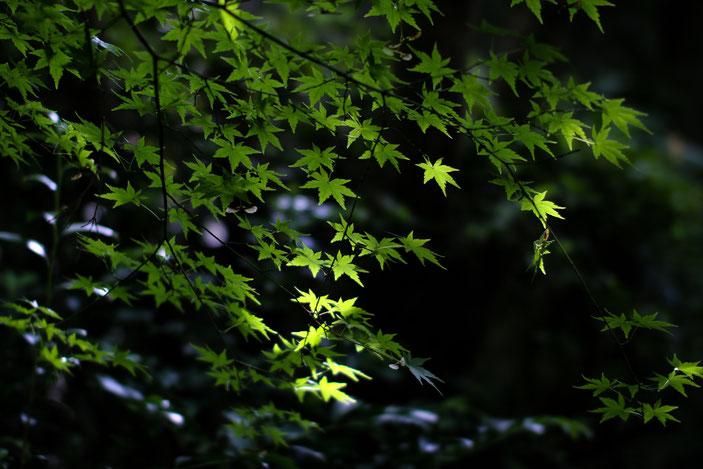 丈山苑 CanonEOS8000D Sigma50mmF1.4 photo : toshimasa