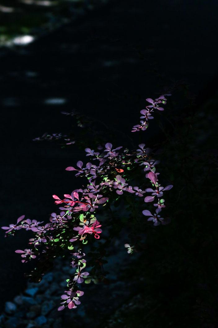丈山苑 CanonEOS8000D CanonEF70-300mmF4-5.6L photo:toshimasa