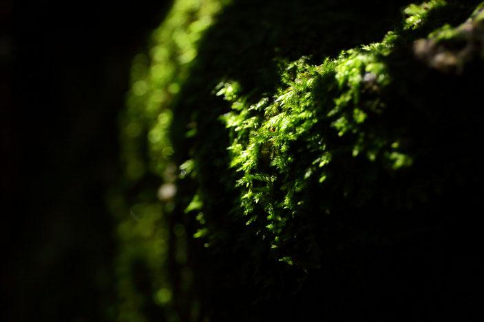 王滝渓谷 CanonEOS5Dmk2 CanonEF24-70mmF4L photo : toshimasa