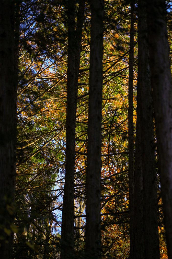 二畳ケ滝 CanonEOS 5Dmk2 CanonEF70-300mmF4-5.6L iso100 170mm f5 1/125 Tv photo : toshimasa