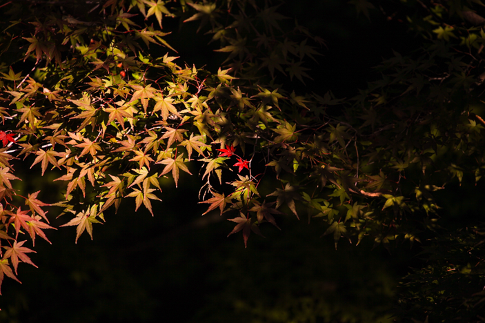 丈山苑 CanonEOS 5Dmk2 Canon EF70-300mmF4-5.6L iso100 300mm f5.6 1/640 Tv photo : toshimasa