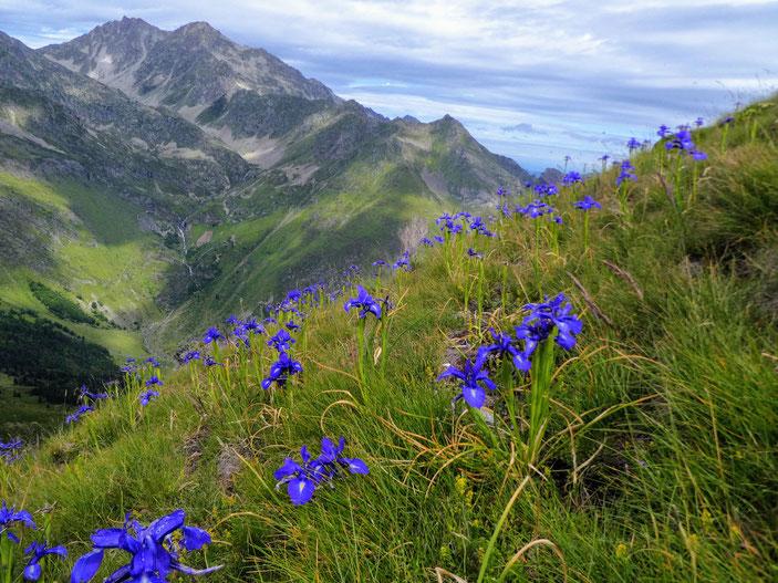 Lac d'Antarrouyes - Pics de Bastampe et Barbe de Bouc (2964 m)