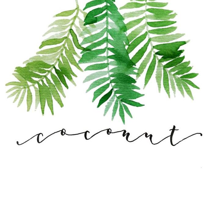 coconut - Handlettering mit Aquarell - lisa_pisa_lettering bei den Letter Lovers