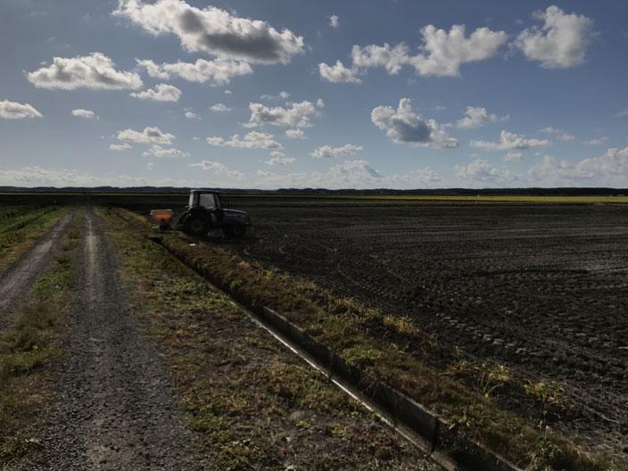 にんにく栽培肥料散布