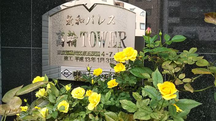 黄色いバラ@菱和パレス高輪TOWER管理組合ブログ