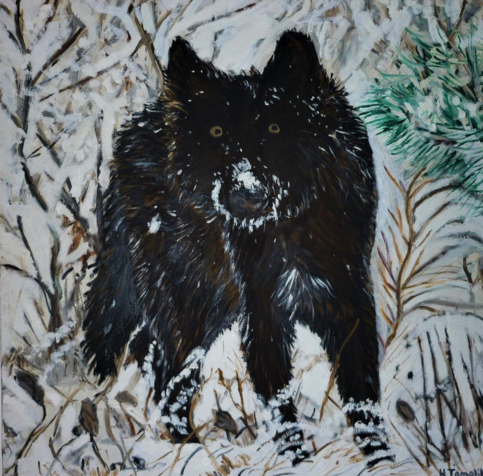 An older work. Black wolf. 100 x 100 cm,oil on canvas