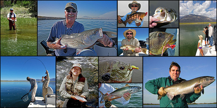 A collage of San Diego Fly Fishing Fish caught by Stroud Tackle customers, staff, and friends