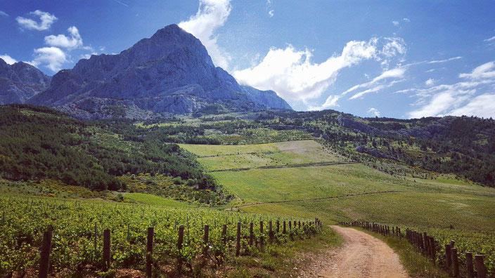 Weinberge des Weingut Plenkovic in der Nähe von Šibenik