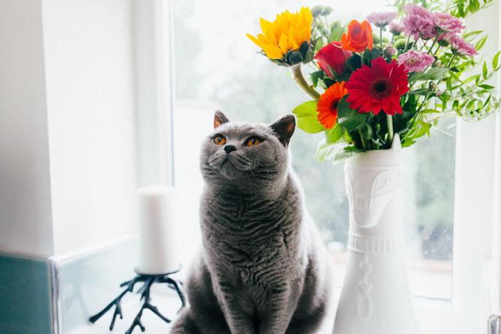 キャットシッターねこやま yokohama 横浜 猫 ネコ キャットシッター 猫シッター キャットフード ご飯 もぐもぐ mgmg
