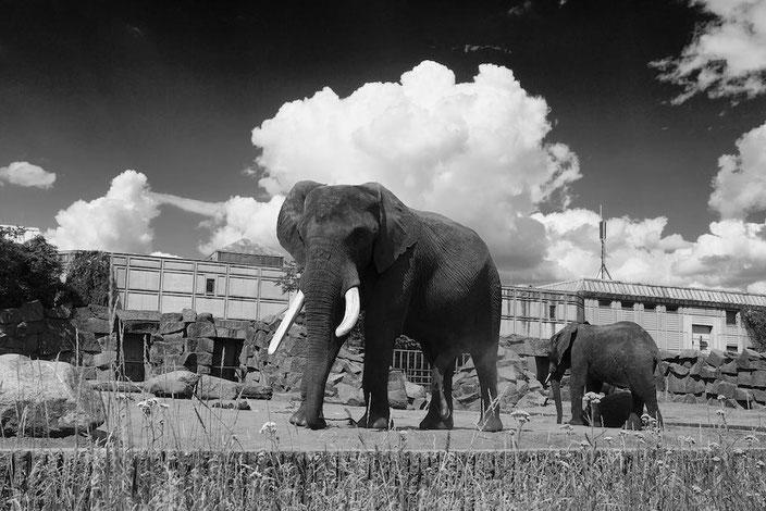 Berlintipp: Besuch im Tierpark (Zoo)