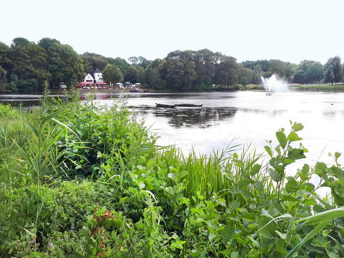 """Speckenbütteler Park mit Blick auf das Wirtshaus """"Haus am See"""", Bild: Andre Kleinhanns"""