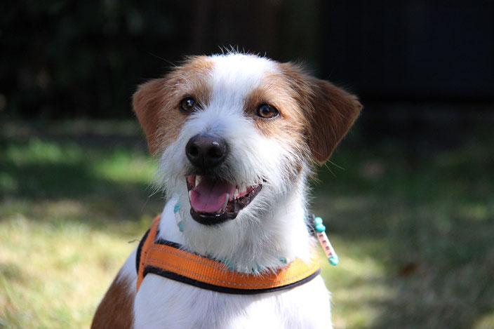 Deery vom Flawenjupé - 14 Monate alt