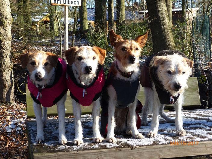 19. Januar 2017  Amine besucht ihre Familie in Verl...gemeinsam machen sie den Winter- Holter Wald unsicher