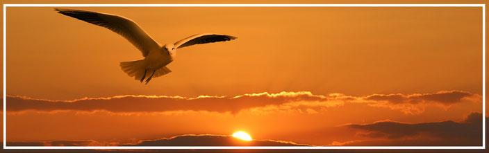 szabadon repülö madár