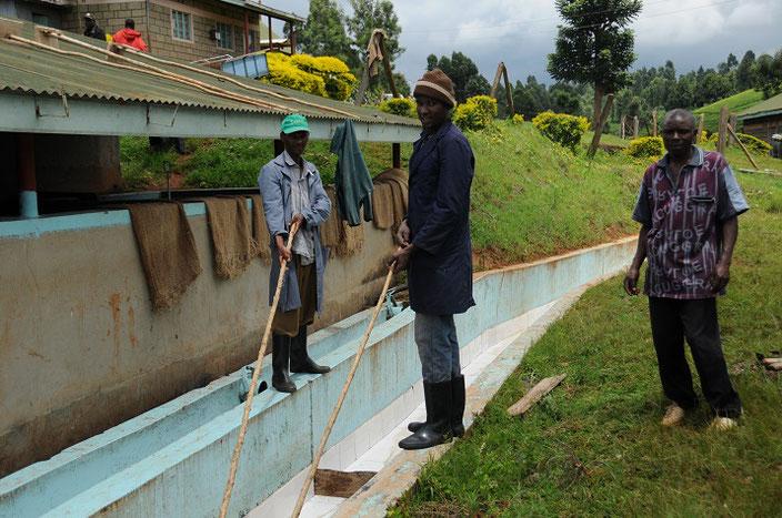 ウオッシュト(水洗)のための水路。掃除中です。