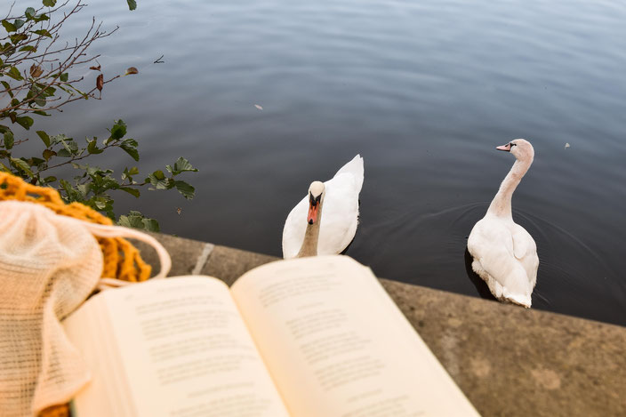 Schwäne und davor Buch. RiekesBlog