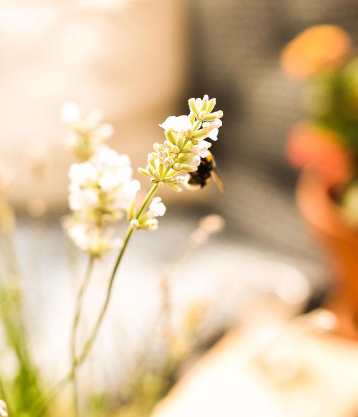 Rettet die Bienen — Mit diesen 5 einfachen Tipps kannst du aktiv etwas gegen das Bienensterben tun RiekesBlog
