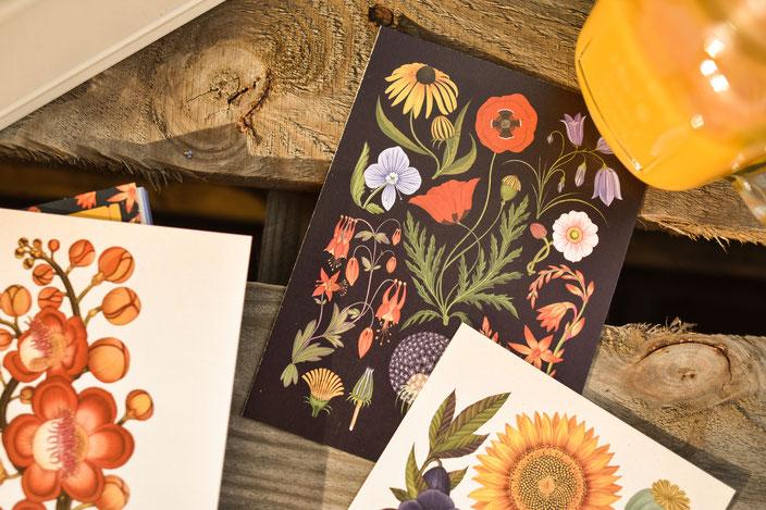 Vorschaubild: Buchtipp: Das Museum der Pflanzen — Postkarten-Buch