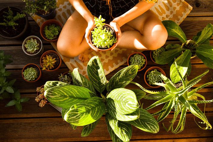 Titelbild: Pflanzen Haul — Mit nur einem Einkauf zu einer grünen Wohnung RiekesBlog.com