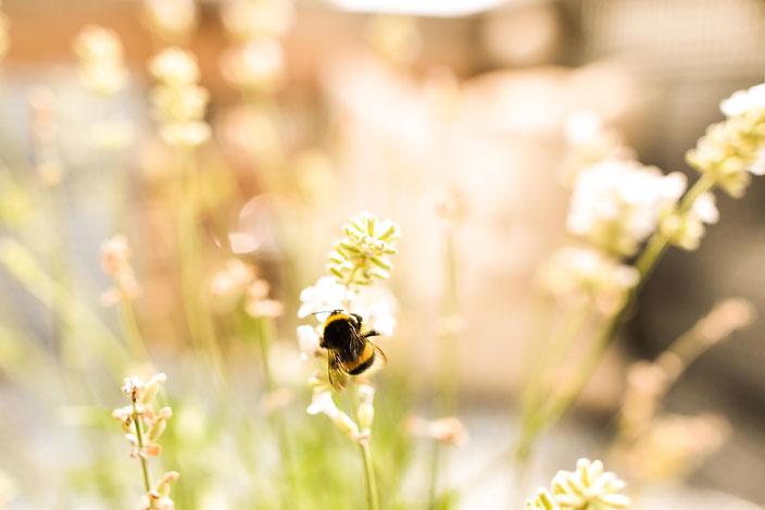 Titelbild Rettet die Bienen — Mit diesen 5 einfachen Tipps kannst du aktiv etwas gegen das Bienensterben tun RiekesBlog