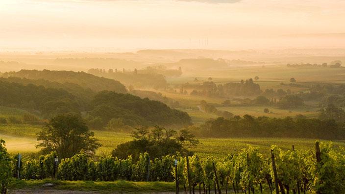 Die Pfalz -  Landschaft so weit das Auge reicht. Das will erhalten sein. Foto: Pfalz-Touristik