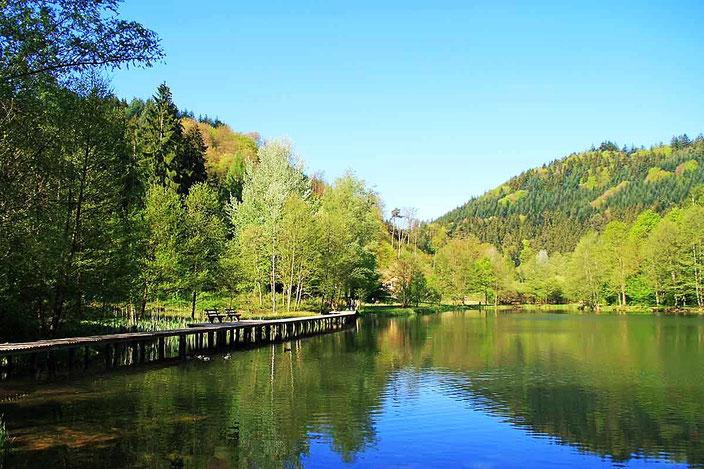 Naturidyll südöstlich  von Elmstein im Lambrechter Tal: der Helmbachweiher