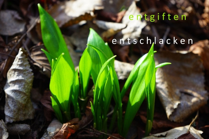 Frühling-Leber - entgiften, entschlacken