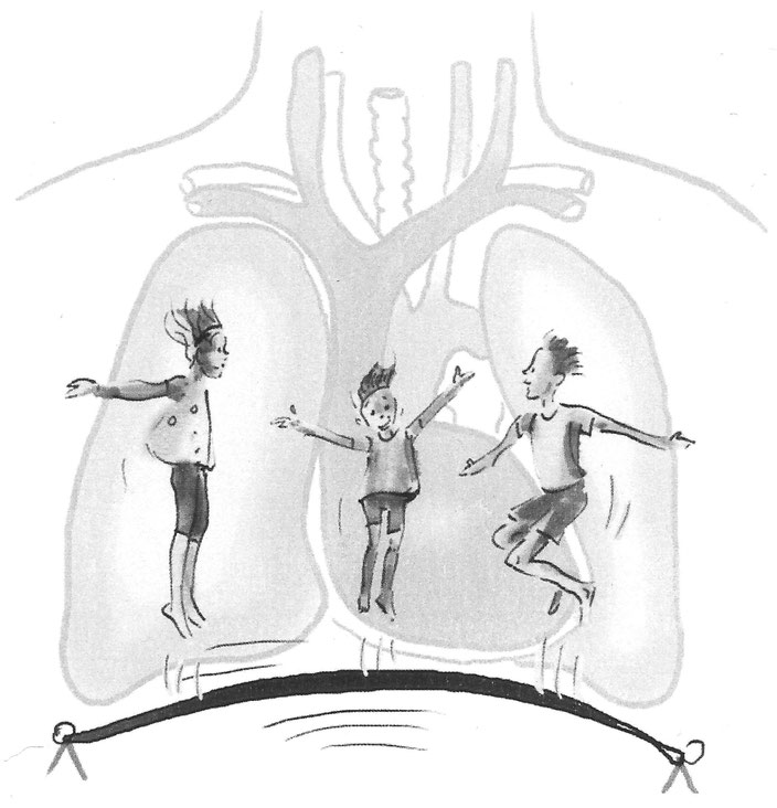 Das Zwerchfell (Diaphragma), unser wichtigster Atemmuskel - majatem.ch
