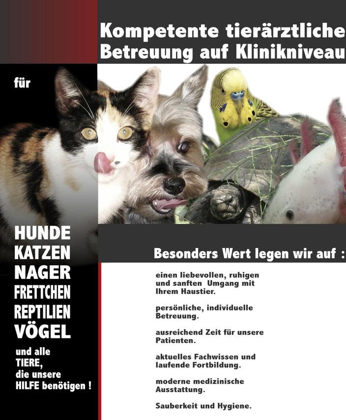 Ihre Tierärztin für den Großraum Graz und Graz - Umgebung