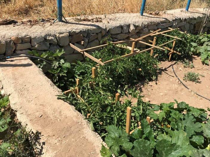 Gemüseranken im Garten